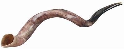 shop rams horn yemenite shofar polished large size marigold house judaica boutique west los angeles rams horn yemenite shofar large
